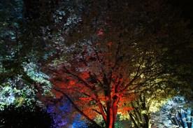 lichtfestival156
