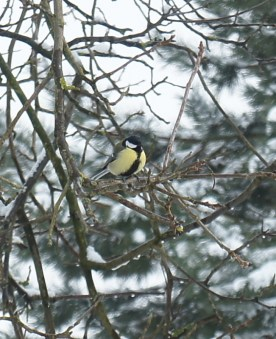 winter_birds15