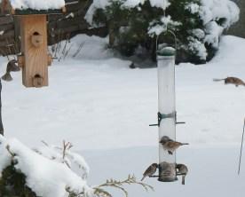 winter_birds07