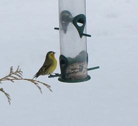 winter_birds23