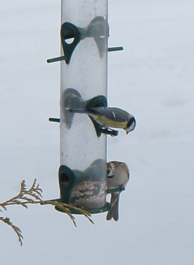 winter_birds25