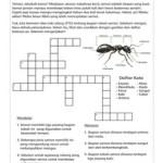 TTS : Bagian Tubuh Semut