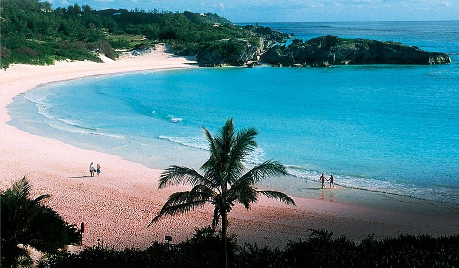 Image result for pink sand palmtrees