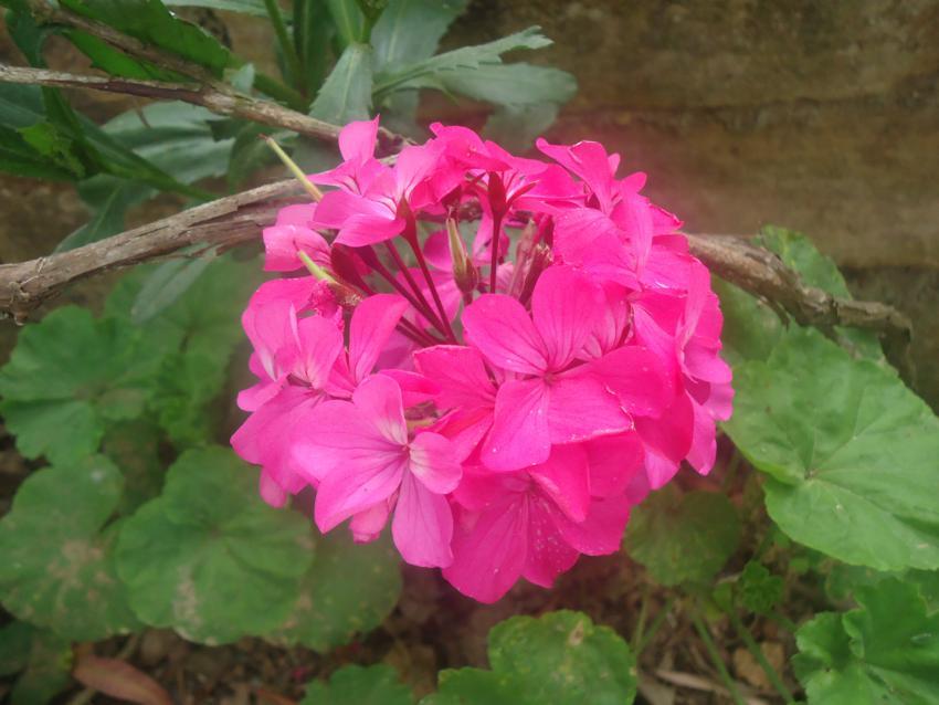Plantas que ajudam a melhorar o humor