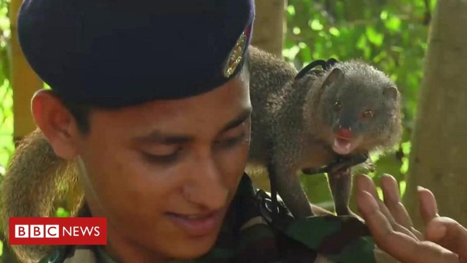 Exército do Sri Lanka