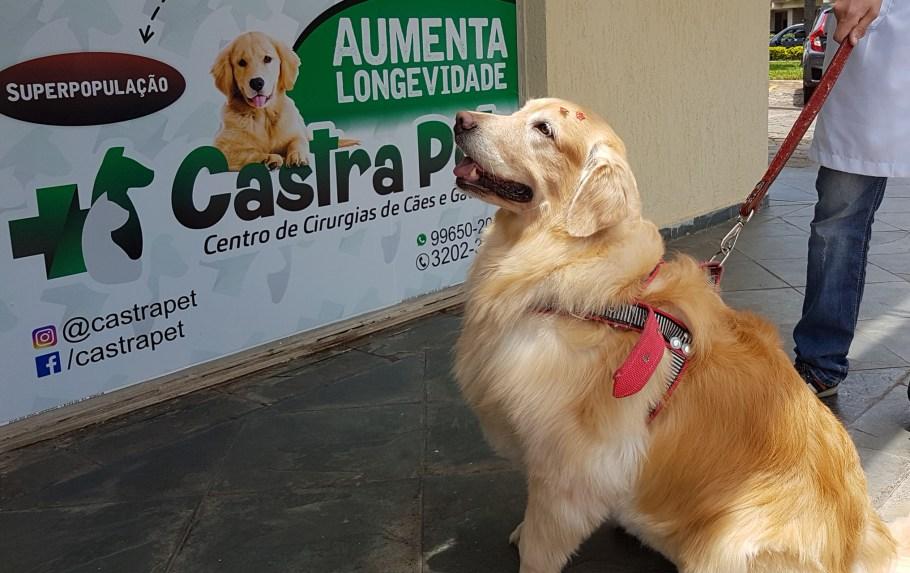 Centro de Cirurgias de Cães e Gatos Castra Pet