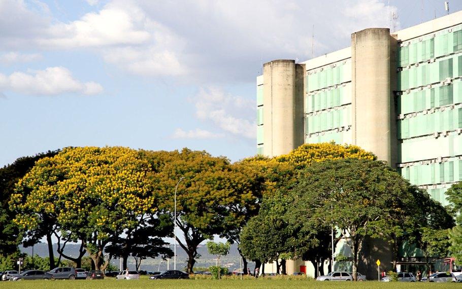 Sibipirunas enfeitam Brasília