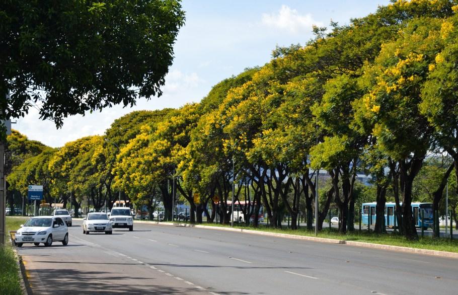 Cambui colore Brasilia