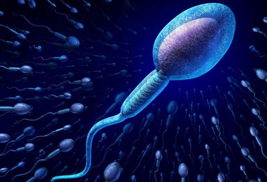 Produtos Químicos afetam fertilidade - bernadetealves.com