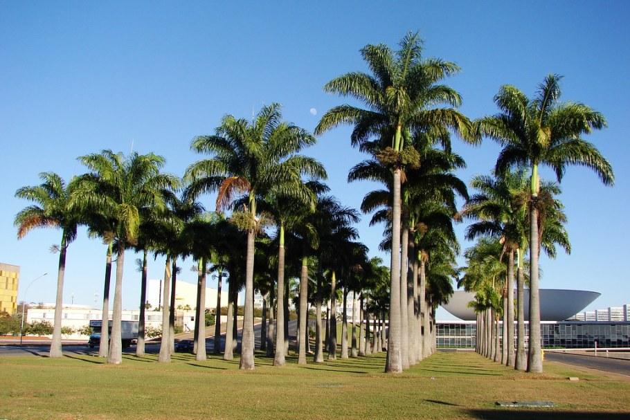 Jardim das Palmeiras - Congresso Nacional, Brasília Bernadete Alves