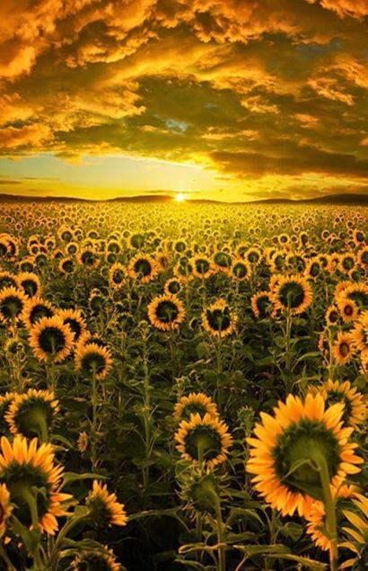 Setembro Amarelo - um giro pela vida