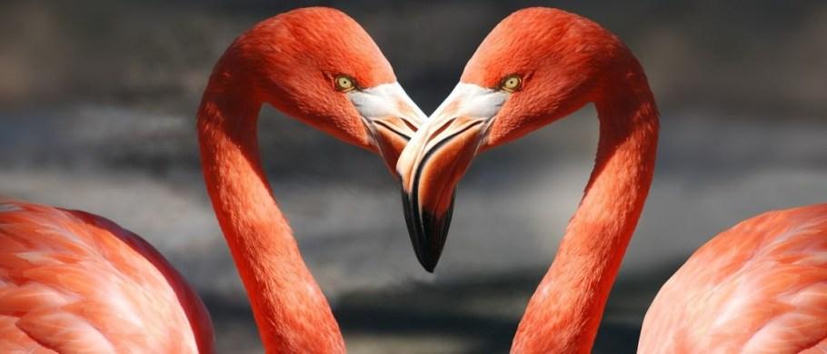 Dia das Aves - conhecer para proteger -Flamingos - Bernadete Alves