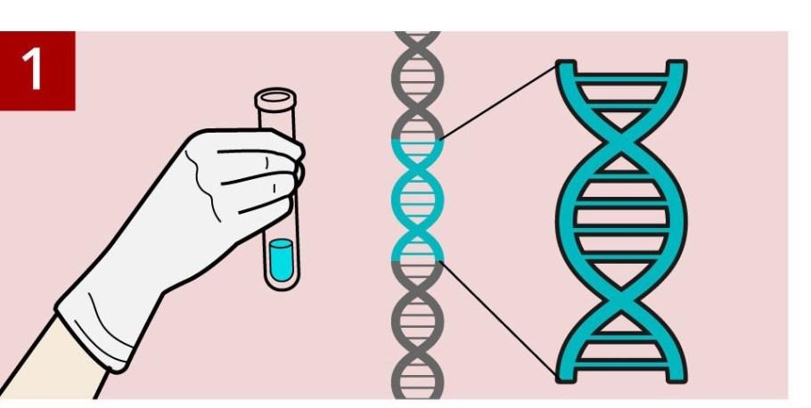 Terapia genética livra brasileiro de linfoma terminal - Bernadete Alves