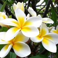 Plantas que purificam ambientes e afastam energias negativas