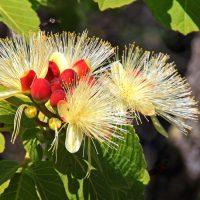 Primavera: a estação do esplendor, da renovação e da esperança