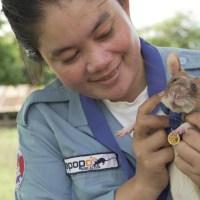 Rata neutraliza milhares de minas na Camboja e ganha prêmio no Reino Unido