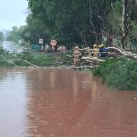 Chuva forte em Brasília derruba árvores, causa alagamentos e assusta motoristas