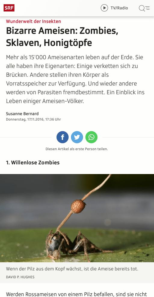 Screenshot Artikel Ameisen