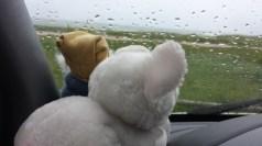 Die Sau un der Sepp sind auch nicht begeistert vom Wetter. In der Ferne hinter der Scheibe liegt die Nordsee rum.