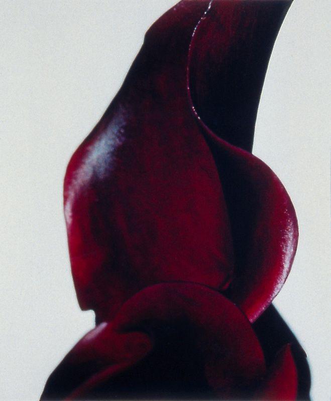 ohne Titel (070) - 2001