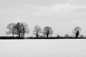 A row of trees in the snow, illustration for Ten January Targets post by Bernie Delaney