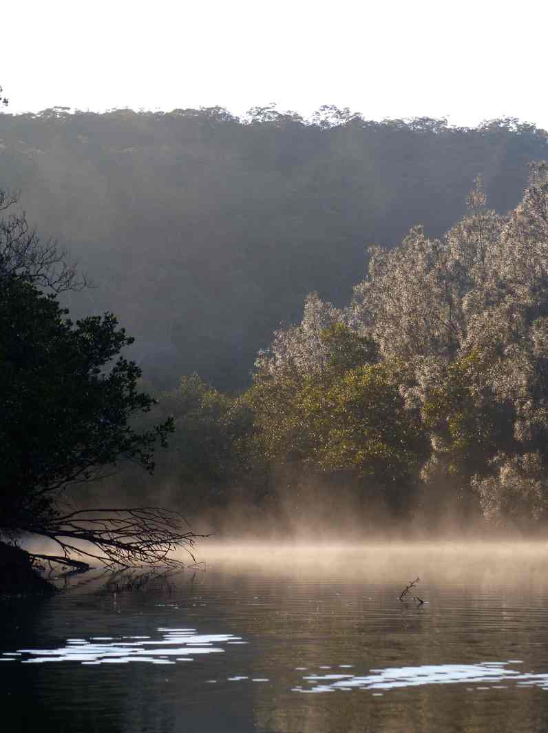 The sacred kingfisher was probably in this picture of mist rising on Pile Creek though it's hard to say