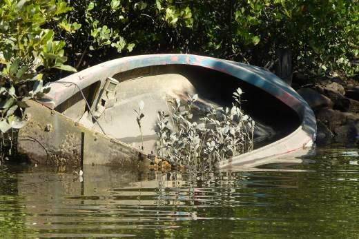 Boat mangrove habitat