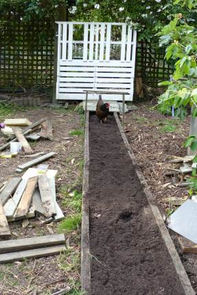 Evolution of a raised bed