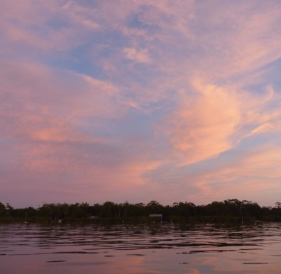 mangroves-ripples-and-pink-clouds-crop