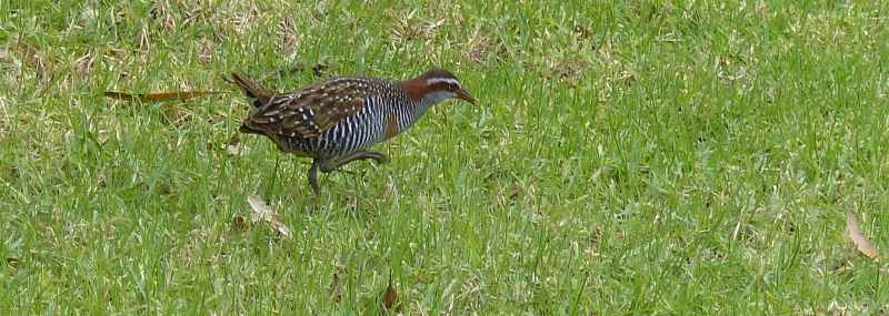 Buff banded rail with raised leg long and skinny