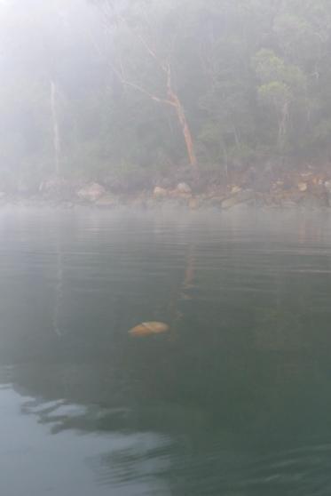 Jellyfish in the mist