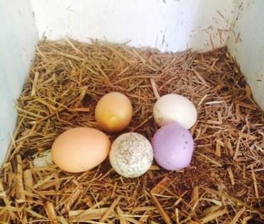How many eggs?