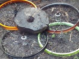Upcycled bicycle wheels protecting radishes