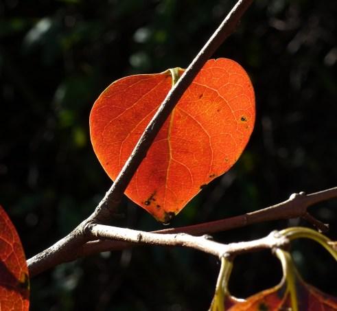 Love those leaves...