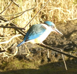 Kingfisher in recovery mode