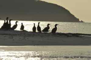 Cormorants in front of the heads