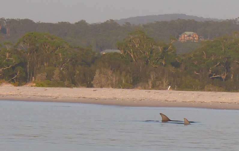 Mother and baby bottlenosed dolphin off Corrie Island
