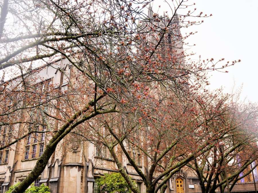 2018-03-23 UW Cherry Blossoms 11-17-38