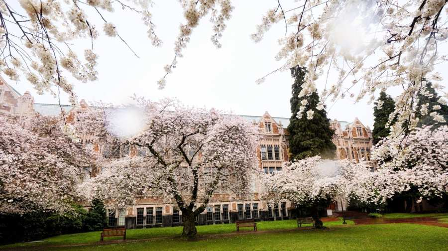 2018-03-23 UW Cherry Blossoms 11-23-45