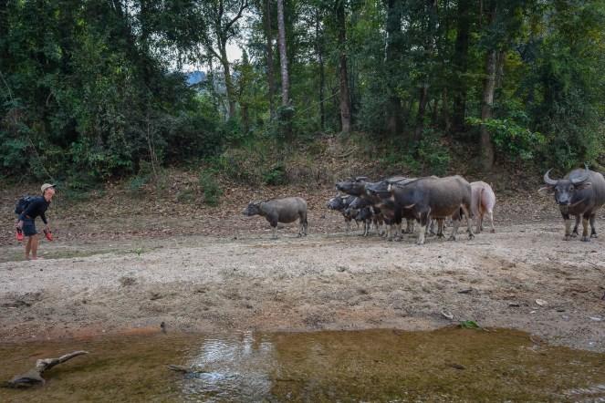 Laos-81