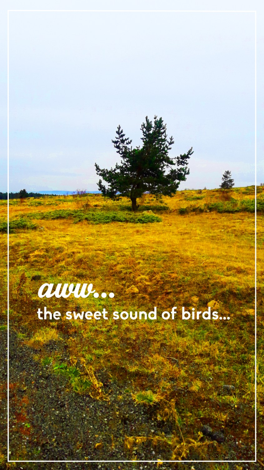 treesbirds.jpg