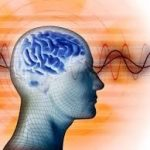 brainconnection