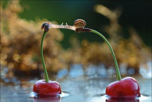 Hâtez vous lentement, les choses ne durent pas mais vous les trouverez bonnes !