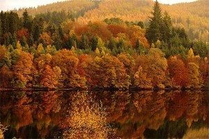 An image of autumnal trees by a Scottish loch