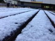 Quelques milimètres de neige