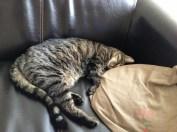 Samedi 20 février : vive la sieste !
