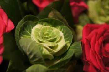 Samedi 11 janvier : chou ou fleur ?