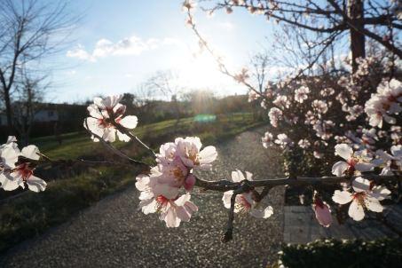 Lundi 16 mars 2015 : un air de printemps