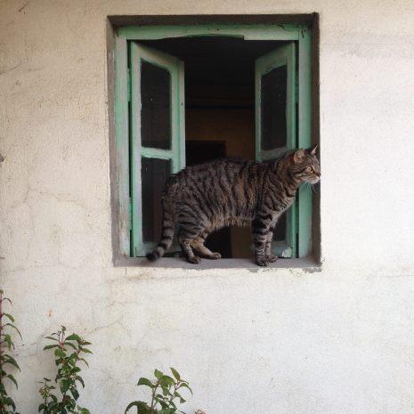 Lundi 18 mai 2015 : notre Diki explore la terrasse