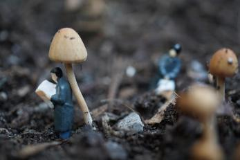 Lundi 8 juin 2015 : lecture à l'ombre d'un champignon dans notre jardinière